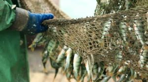 fish-nets