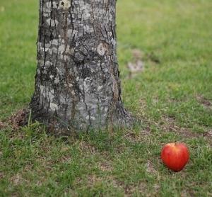 apple-tree-